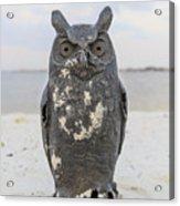 Owl On The Beach Acrylic Print