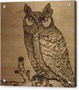 Owl Pyrography Acrylic Print
