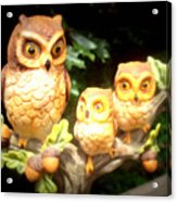 Owl Trio Acrylic Print
