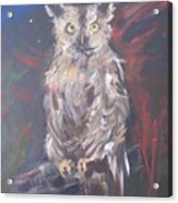 Owl Watchers Acrylic Print by Paula Marsh