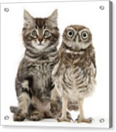 Owling And Yowling Acrylic Print