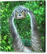 Owll In Flight Acrylic Print