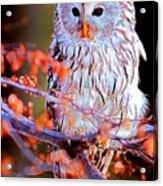 Owlrightythen Acrylic Print