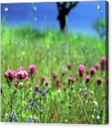 Owl's Clover And The Tree Acrylic Print