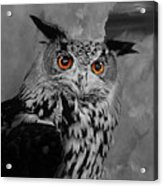 Owls Eye Acrylic Print