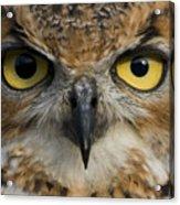 Owls Eyes Acrylic Print
