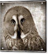 Owls Eyes -vintage Series Acrylic Print