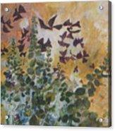 Oxalis Acrylic Print