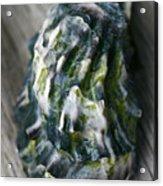 Oyster Shell Acrylic Print