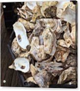 Oyster Shells Acrylic Print