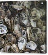 Oysters Four Acrylic Print