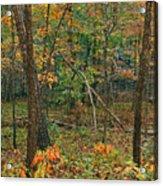 Ozark Forest In Fall 2 Acrylic Print