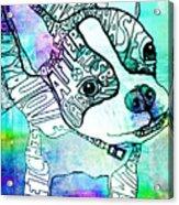 Ozzy Boy Blues Acrylic Print by Robin Mead