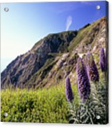 Pacific Coast View With Blue Wildflowers Acrylic Print by George Oze
