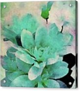 Pacific Cool Acrylic Print