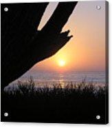 Pacific Cypress Sunset Acrylic Print