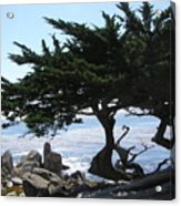 Pacific Cypress View Acrylic Print