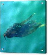 Pacific Kelp Acrylic Print