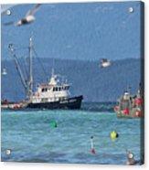 Pacific Ocean Herring Acrylic Print