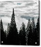 Pacific Pines Acrylic Print
