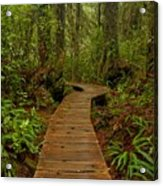 Pacific Rim National Park Boardwalk Acrylic Print