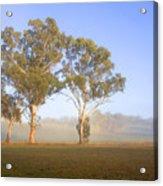 Paddock Sunrise Acrylic Print