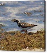 Padre Island National Park Acrylic Print
