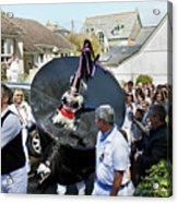 Padstow Blue Oss And Supporters Acrylic Print