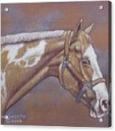 Paint Horse Acrylic Print by Dorothy Coatsworth