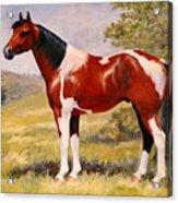 Paint Horse Gelding Portrait Oil Painting - Gizmo Acrylic Print