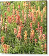 Paintbrush Beauties Acrylic Print