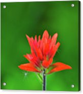 Paintbrush Acrylic Print