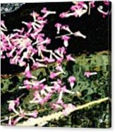 Paintbrush In A Creek Acrylic Print