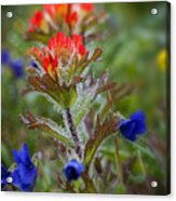 Paintbrush In The Mist Acrylic Print