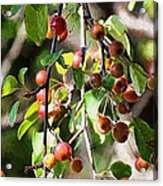 Painted Berries Acrylic Print