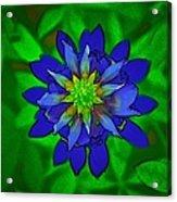 Painted Bluebonnet Acrylic Print