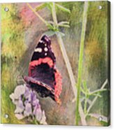 Painted Butterfly Acrylic Print