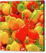 Painted Chilies Acrylic Print