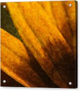 Painted Daisy Sunburst Acrylic Print