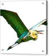Painted Flight  Acrylic Print