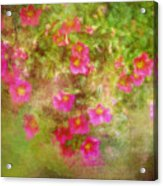 Painted Flowers Acrylic Print