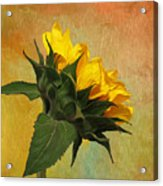 Painted Golden Beauty Acrylic Print