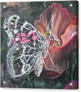 Painted Lady On A Pansy Acrylic Print