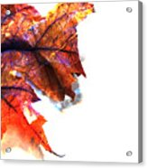 Painted Leaf Series 1 Acrylic Print