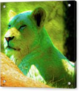 Painted Lion Acrylic Print