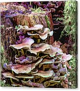 Painted Mushrooms Acrylic Print