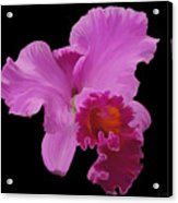 Painted Orchid Acrylic Print