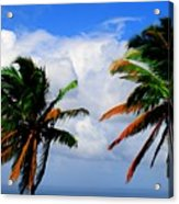 Painted Palm Trees Acrylic Print