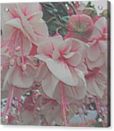 Painted Pink Fushia Acrylic Print