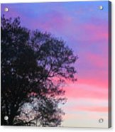 Painted Pink Sky Acrylic Print by Guy Ricketts